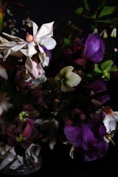 Magnolia and iris