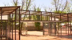 outdoor pet bird aviary