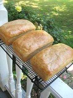 Miranda's Recipes: Honey Wheat Bread