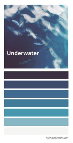 color palette inspired by fish swimming underwater Nature Color Palette, Blue Palette, Colour Palettes, Colour Trends, Colour Schemes, Color Boards, Art Boards, Guest Room Office, Fish Swimming