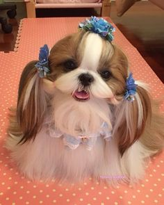 Dogs before and after their Spring Haircuts 30 Dogs that Have Better Hair Than You diy funny tattoo bonitos cachorros graciosos Cute Baby Dogs, Cute Little Puppies, Cute Little Animals, Cute Dogs And Puppies, Cute Funny Animals, Funny Dogs, Doggies, Baby Animals Pictures, Cute Animal Pictures
