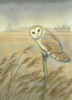 'Barn Owl Watching' By Kate Green.  Blank Art Cards By Green Pebble.
