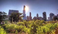 Millennium Park Chicago, IL