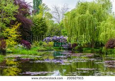 POND Stock Photos, Images, & Pictures | Shutterstock