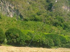"Paisaje árboles de mango  ""Matices en verde"".. Mango, Country Roads, Plants, Green, Manga, Planters, Plant, Planting"