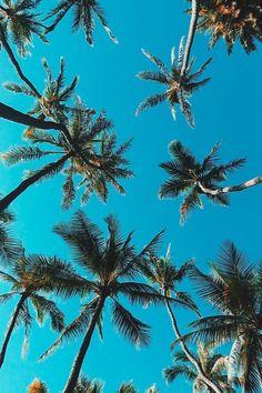 53 Ideas Palm Tree Wallpaper Iphone 7 Plus Tree Wallpaper Iphone, Summer Wallpaper, Aesthetic Iphone Wallpaper, Screen Wallpaper, Aesthetic Wallpapers, Wallpaper Backgrounds, Iphone Wallpapers, Images Murales, Photo Polaroid