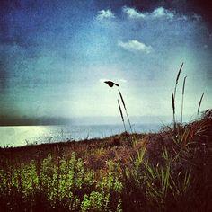 #bird in #restoredhabitat #bestoftheday #instaaaah #igsobay #instagram_underdogs #instagramhub #all_shots #losangeles #palosverdes #pointvicente #landscaping #sunset #flight