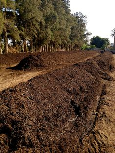 Creating good compost requires a lot of care and attention, piles need to be monitored for temperature, moisture, and oxygen at A. Fakhry & Co. | Crafters of Aromatic Raw Materials, Egypt