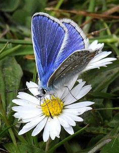 ~~~mafio~~~: Butterflies