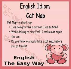 I am very tired. I am going to take a _______. 1. cat nap 2. food #EnglishIdom