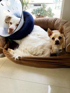 Mac & his protector. Toto...