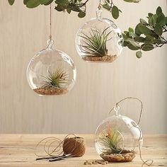 Hang in multiples? Red Envelope glass garden globe + plant