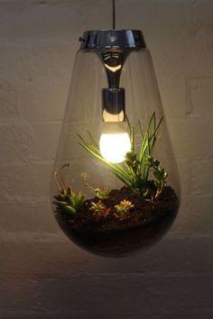 照明も兼ねたテラリウム、植物への光も補え効率的です。
