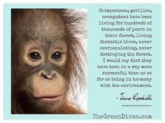 orangutan jane goodall quote