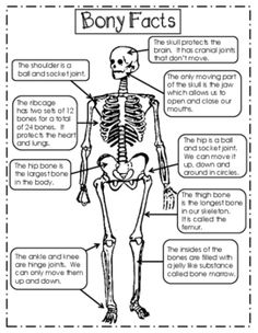Nurses Discover Skeleton Unit for Upper Elementary Teach this fun and engaging unit about the skeleton. Includes reading passages charts task cards and even an assessment! Science Lessons, Science Activities, Life Science, Science Education, Physical Education, Health Education, Elementary Science, Science For Kids, Upper Elementary