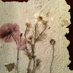 Pressed flowers on homemade paper