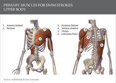 More Essential Stretches for Swimmers | Singapore Physiotherapy for Musculoskeletal Conditions