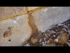Home Inspector Dallas Shows How To Identify Termite Infestation   (214) ...