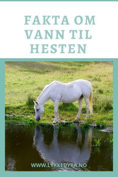 Hvor mye vann trenger hesten din? Horses, Animals, Nature, Animales, Animaux, Animal, Animais, Horse