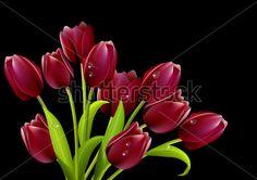 Ramo de tulipanes rojos. Fondo negro. imágenes prediseñadas (clip arts).