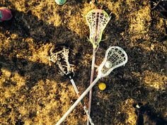 LACROSSE (GIRL'S LAX STICKS TOO) [dies of happiness]