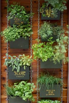 How To Urban Garden These 'Vertical Balcony Garden Ideas' will inspire you to generate space and how to make balcony vertical garden. - These 'Vertical Balcony Garden Ideas' will inspire you to generate space and how to make balcony vertical garden. Vertical Herb Gardens, Vertical Garden Diy, Vertical Planter, Small Gardens, Vertical Garden Vegetables, Vertical Plant Wall, Indoor Garden, Outdoor Gardens, Hanging Gardens