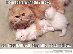 Overprotective moms... Funny Cat Pics, Mama Ca and Funny Kitten Pics, cat, kitten, funny, kawaii, adorable