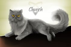 Church is the best cat in whole world