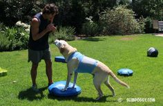 Canine Fitness Equipment: Balance Discs and Boards http://slimdoggy.com/canine-fitness-equipment-balance-discs-and-boards/