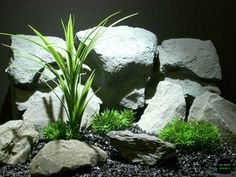 hand designed aquarium decor plants & reptile plants | ron beck designs photostream #ron_beck_designs #aquarium #aquascaping #plant #decor #reptile
