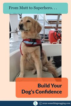 Do you dream of living on a boat with your dog? Then you'll want to build your dog's confidence. Here's how. #boatdog #sailingdog #dogswhosail #liveaboard Dogs On Boats, Living On A Boat, Dog Anxiety, Kinds Of Dogs, Out To Sea, Dog Training Tips, Anxious, Labrador Retriever, Jewel