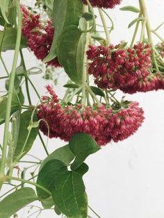 Sedum #flowersinthefoyer #autumn