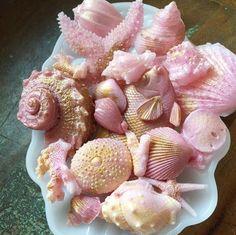 Soap Seashells by TheCharmingFrog Handmade Soap Recipes, Handmade Soaps, Creation Bougie, Decorative Soaps, Bath Soap, Soap Packaging, Soap Molds, Home Made Soap, Wax Melts