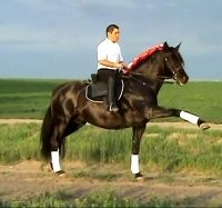 Lusitano in Spanish walk! This horse is for sale at Epona Exchange!
