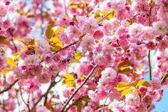 Résultats de recherche d'images pour «branches arbres en fleurs»