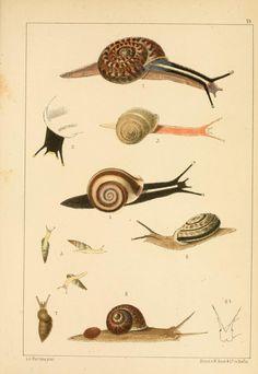 Bd 2 - Die Preussische expedition nach Ost-Asien : - Biodiversity Heritage Library