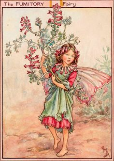 The Fumitory Fairy - Flower Fairies of the Wayside