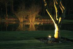 aanlichten van een boom