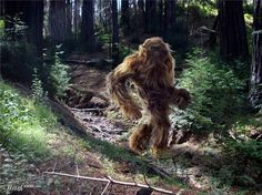 Sasquatch - Sasquatch by ufurgger 12th place entry in Hoaxes Category. DesignCrowd.com. DesignCrowd is a marketplace which connects individuals and businesses seeking design with the most creative people on the planet.