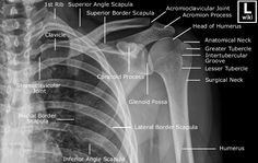 Shoulder Radiographic Anatomy - wikiRadiography