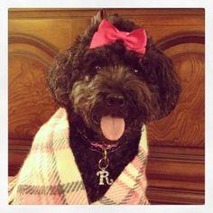 My Instagram Friends http://raeganhuston.com/my-instagram-friends/ #instagram #dogs #pets