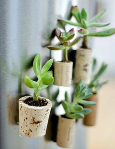 How to make wine cork magnet planters with succulents, magnets, wine corks. Full tutorial with pictures on how to make wine cork magnet planters for fridge. Wine Craft, Wine Cork Crafts, Wine Bottle Crafts, Wine Bottles, Wine Cork Art, Alcohol Bottles, Diy Craft Projects, Wine Cork Projects, Decor Crafts