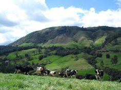 Formulación y ejecución de proyectos de extensión con productores de leche en la subregión, con el apoyo de la Sede Yarumal