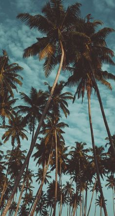 Palm Tree Wallpaper Iphone Xs Max 62 Ideas For 2019 Beste Iphone Wallpaper, Iphone Background Wallpaper, Tree Wallpaper, Animal Wallpaper, Colorful Wallpaper, Flower Wallpaper, Nature Wallpaper, Mobile Wallpaper, Black Wallpaper