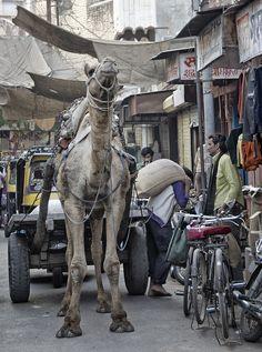 A camel cart works its way down a narrow street - Bikaner - Rajasthan by Eric Parker