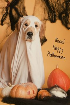 funny dog dressed like a ghost for the halloween