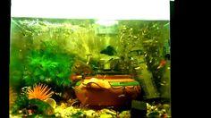 the best way to make 1 million guppy fish in your aquarium 2017