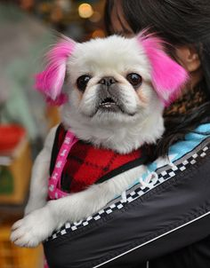 How to Dye a Dog´s Hair At Home Using Kool-Aid