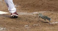 The Squirrel !!