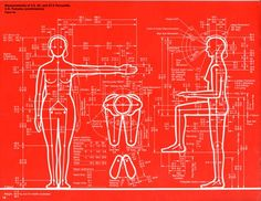 Wall Graphic, Humanscale: Measurements of 2.5, 50, and 97.5 Percentile U.S…